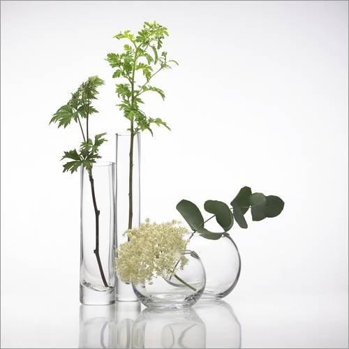 Poster 50 x 50 cm: Pflanzen in Glasvasen von Science Photo Library - hochwertiger Kunstdruck, neues Kunstposter