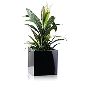 Plant Pot CUBO Fibreglass Planter, Flowerpot - Colour: black, glossy, high gloss surface - weather- and frost-proof, Indoor & Outdoor Use