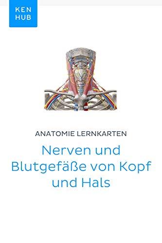 Anatomie Lernkarten: Nerven und Blutgefäße von Kopf und Hals: Lerne ...