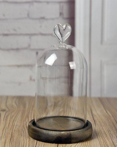 Cúpula de Vidrio campana campana de cristal con bandeja de madera de