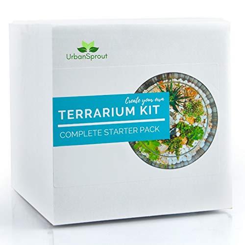 Kit Planta Terrario para Suculentas Plantas y Cacti. Incluye suelo de cactus, musgo, grava y guía paso a paso