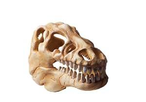 Hydor Crâne de dinosaure décoratif non toxique pour aquarium