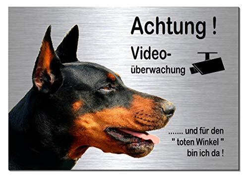 Dobermann-Videoüberwachung-Hund-Schild-Hundeschild-30 x 20 cm-Aluminium Edelstahloptik-Hunde-Tierschild-Warnschild-Hinweisschild (133-19 - 30 x 20 cm mit Löcher)