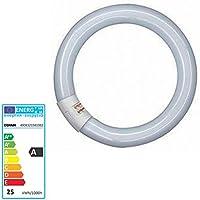 Osram Lumilux T9 Tubo Fluorescente GR10q, 22 W, Blanco (Cool White), 21.6 cm