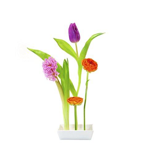 amik mit 5 Steckplätzen (Blumen-shop Versorgt)