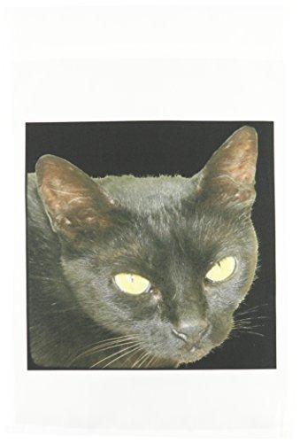 3dRose FL 128300_ 1Black Cat Eine Nahaufnahme Fotografien Portrait of A Halloween Katze schwarz mit gelb Augen Garten Flagge, 12von 18