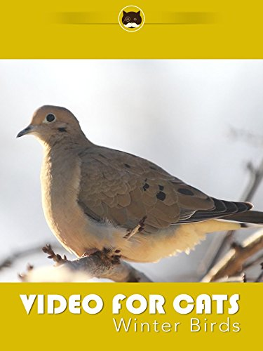 Video for Cats Winter Birds [OV] (Finch-feed)