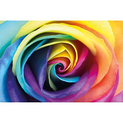 GREAT ART XXL Poster - Regenbogenrose - Blüten Wanddekoration Rosen Wandbild Schön Natur Flower Deko farbenfrohe Blumen Regenbogen Motiv (140 x 100 cm)