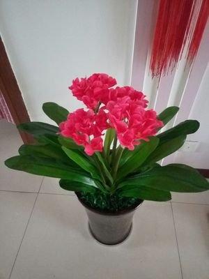 fkduih die Topfpflanzen Künstliche Kunststoff Blume Klebstoff doppelt Clivia Phalaenopsis Blätter, vier Stroke rot, ohne Becken