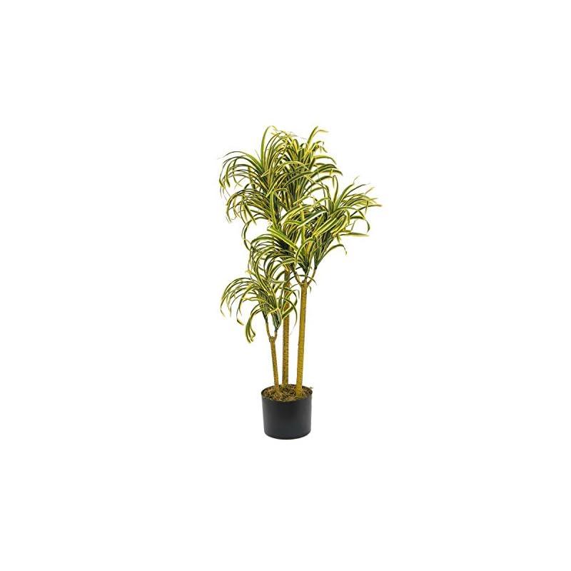Europalms Palml Yucca Gloriosa Mit Naturstmmen 90 Cm