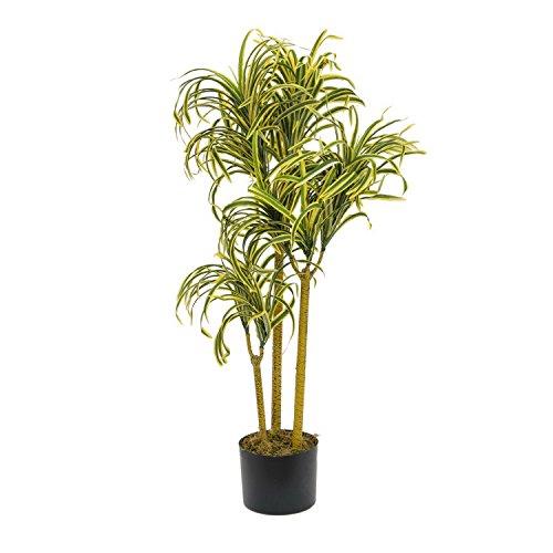 EUROPALMS–Palmöl Yucca Gloriosa mit Naturstämmen, 90cm