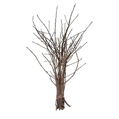 Kirschzweige, 80 cm, frische Zweige, frisch geerntet vom Kirschbaum, Zweige sind ideal für den Barbaratag, frisch geschnittene Baumzweige mit Kirschblüten, Dekozweige (20 Stück)