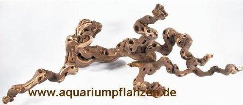Weinrebe 30-40 cm für Terrarium, Wurzel Terrarium