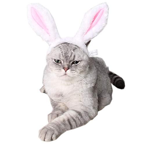 Your little world Halloween-Kostüm für Hunde und Katzen, mit lustigem Teddy-Kostüm