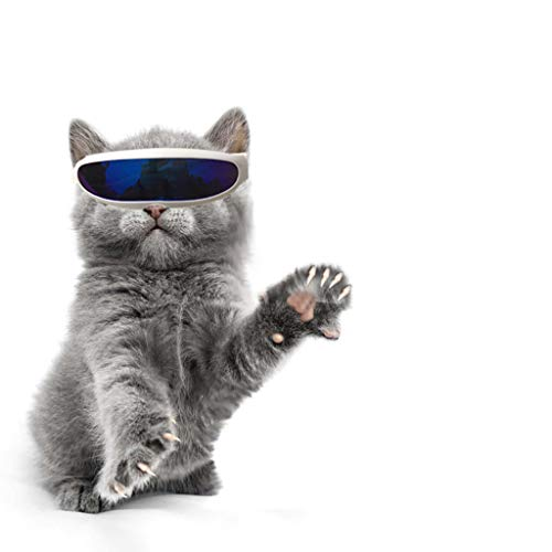TUDUZ-Haustier Brillen Winddichter Schutz Hündchen-Welpen-Sonnenbrille UV-Sonnenbrillen für Katzen und Kleine Hunde für Fotografie Sonnenbrille (Blau)