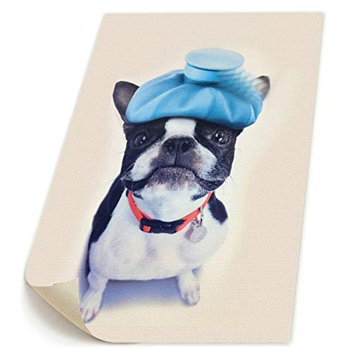 SDGYGSNi Boston Terrier Leinwanddrucke, abstrakte Pop-Art, lustige bunte -