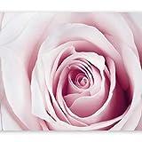 murando - Fotomural 300x210 cm - Papel tejido-no tejido - Papel pintado - rosa flores b-B-0035-a-c