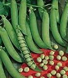 Hortus 58PIS927D Legumi Piccolo Provenzale Pisello, Grano Rotondo, 500 g
