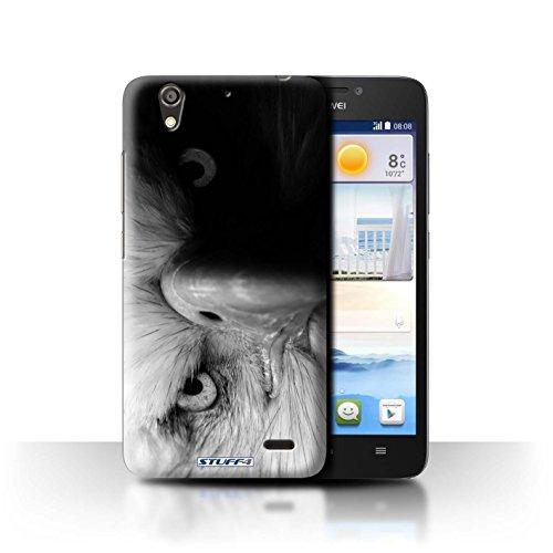 Stuff4® Hülle/Hülle für Huawei Ascend G630 / Adler/Raubvogel Muster/Zoo-Tiere Kollektion