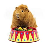 HAYPIGS Guinea Pig Toys and Accessories - Circus Themed FOOD CRAVING TAMER Guinea Pig Bowl - Guinea Pig Food Bowl - Hedgehog Bowl - Rabbit Bowl - Small Animal Food Bowl
