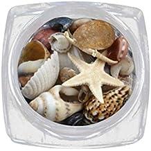 Lurrose 1 Caja Ocean Style Decoraciones DIY Natural Mini Conch Conchas Mar Playa Adornos 3D Accesorios