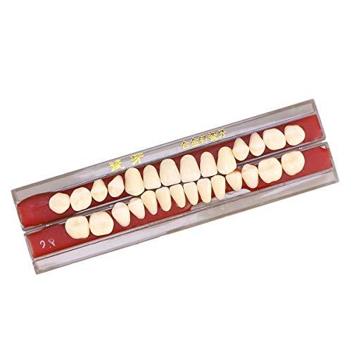 SUPVOX 1 Box Zähne Reparatur Set Arzt Dental Material Zahnprothese (Second Grade 23)