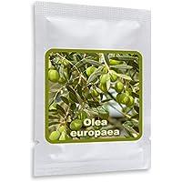 10 SEMILLAS DE OLIVOS (Olea europaea) - EL ÁRBOL REY - cultivable como árbol o bonsái