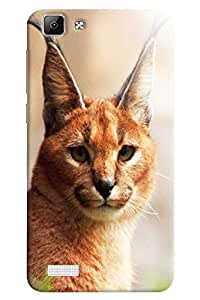 Omnam Cat With Standing Ears Watching Printed Designer Back Case For Oppo F1 Plus