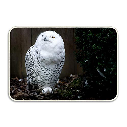 shenhaimojing Doormat Owl Bird Angry Entryway Door Mat for Patio, Front Door,Decorative All-Season 23.6x15.7inches(60x40cm) (Kürbis Birds Angry)