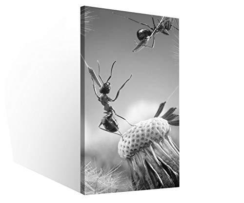 Leinwandbilder 1Tlg Ameisen Fliegen Pusteblume Insekten Blume schwarz weiß Leinwandbild Kunstdruck Wand Bilder Vlies Wandbild Leinwand Bild Druck 9W2029, Canvas BxH 1tlg:30x60cm