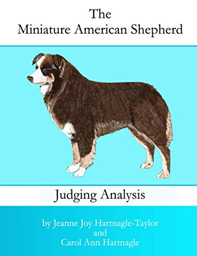 The Miniature American Shepherd Judging Analysis