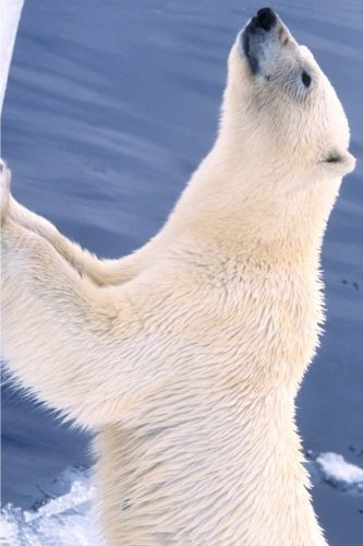 polar-bear-wants-fed-journal-150-page-lined-notebook-diary