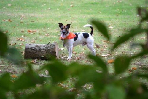 Premier Dog Hunde-Halstuch, 16 Stück - 2