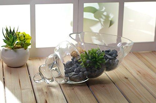 HOSLEY Glas Shell Vase–20,3cm lang. Ideal für Spa, Aromatherapie. Floral Einstellungen. DIY Craft Projekte, Votivkerze Gärten - 3
