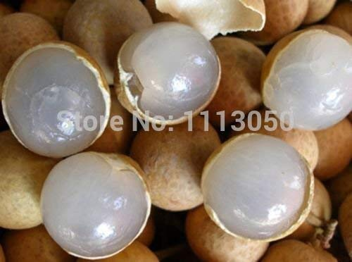 L'OEIL New Rare10 en direct DRAGON exotique LONGAN Dimocarpus Sweet Seeds Tropical Fruit Tree