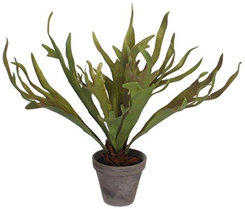 Mica decorations 930673 Blumen, Blattpflanzen großen Blättern, grün