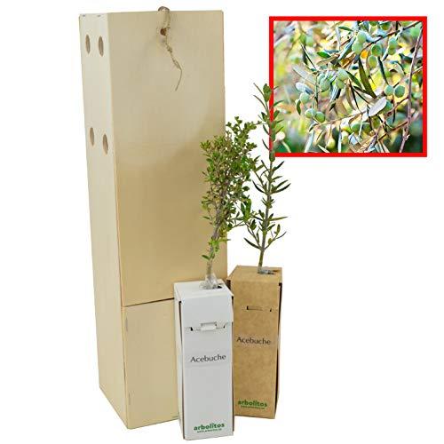 Olivo Silvestre 2 Unidades