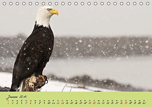 Raubvögel in freier Natur (Tischkalender 2019 DIN A5 quer): Raubvögel in freier Natur (Monatskalender, 14 Seiten ) (CALVENDO Tiere)