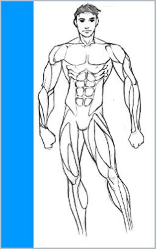 Muskelaufbau - Der richtige Trainingsplan und die optimale Ernährung