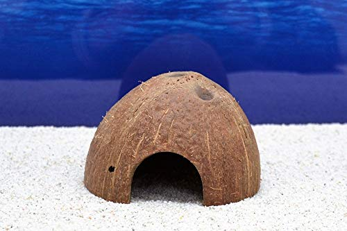 Dohse Aquaristik Aquarium-Deko Kokosnuss Höhle Schale von Hobby Größe M für Welse Fische Versteck (Schalen Fisch Aquarium)
