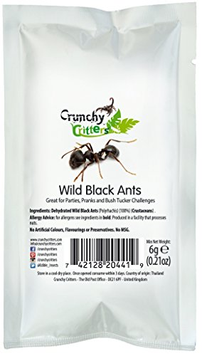wild-black-ants