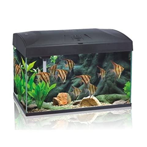 Aquarium Komplett Set 110 L, AA-Aquarium inkl. Pumpe, Lampe u. Filter