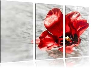 piccolo fiore di papavero in acquain 3 pezzi immagine Foresta tela 120x80 su tela, Immagini XXL completamente incorniciato con grandi cornici di cuneo, stampe d'arte sulla foto parete con telaio, gänstiger come un quadro o un dipinto a olio, non un manifesto o cart