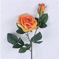 Rara semilla de rosa al aire libre y cubierta perenne de floración multicolor Rose Patio Bonsai en maceta y Jardín 100 Pcs 5