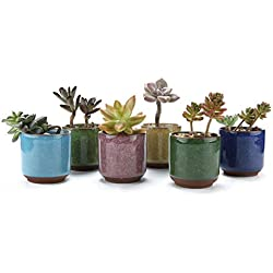 Maceteros para cactus y suculentas