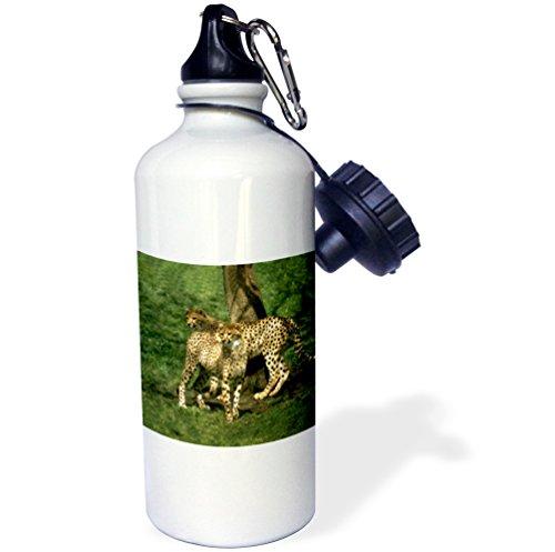 3dRose wb_643_1 Cheetah Sports Water Bottle, 21 oz, White