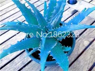 FARMERLY Pacchetto semi: 200 pc rari Piante di Aloe Vera Edi bellezza Edi Cosmetic Vegetas E Frutta Bonsai Piante per la casa & amp; Garden Decor: 12