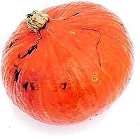 1 Hokkaido Shokichi red kleiner Hokkaido, japanischer Kürbis - Dekokürbis zu Halloween als Herbstdeko und Zierkürbis