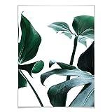 Poster Urban Jungle 03 - Monstera Deliciosa Pflanze exotisch Fensterblatt Urwald immergrün Wall-Art - 40x5