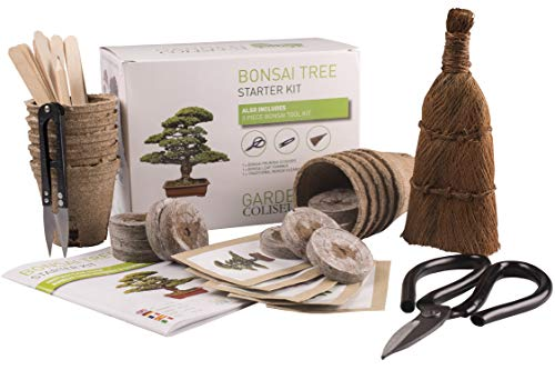 KIT BONSAI ¡CULTIVA TUS PROPIOS ÁRBOLES Kit de germinación bonsais SET REGALO...